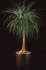 Thumbnail Plant Care Instruction eBook for  Ponytail Palm / Beaucarnea Recurvata  (pdf)